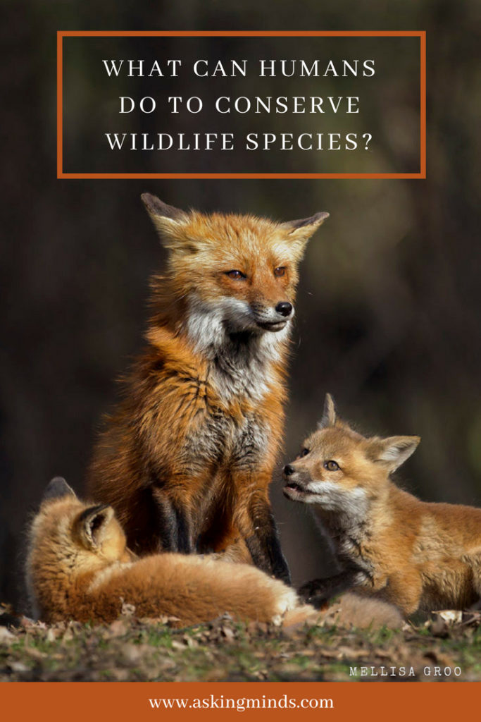 What can humans do to conserve wildlife species? - animals wildlife nature | conservation activities | animals | save the environment | environment awareness | save the earth | wild animals | save the animals | blog to follow | blog topics | blogging | - #blog #wildlife #animals #pinoftheday