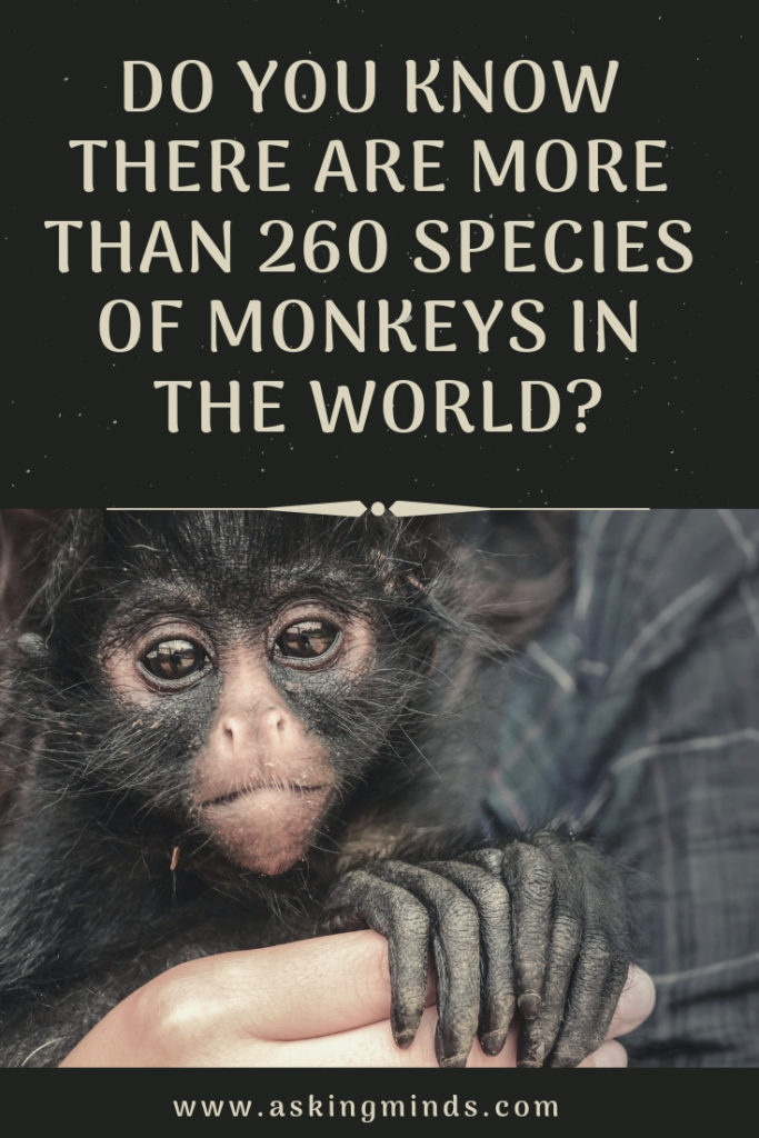 Do you know there are more than 260 Species of Monkeys in the World? - species of monkeys | wild animals | mammals | monkey king | wildlife nature | animals | save the environment | environment awareness | cute animals - #monkey #wildlife #animals
