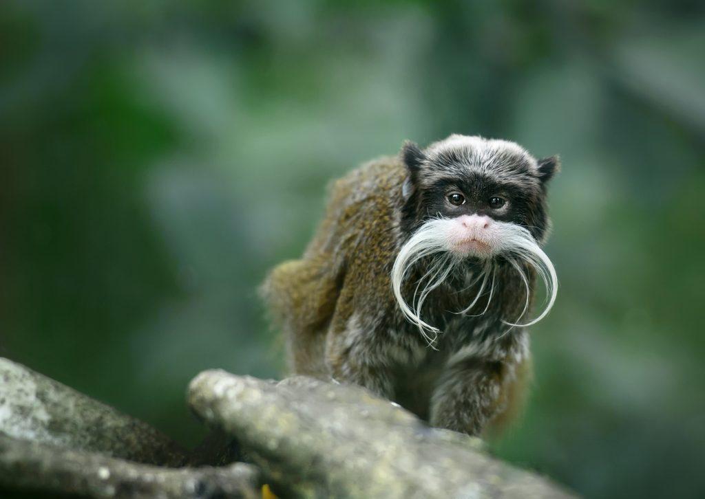 species of monkeys