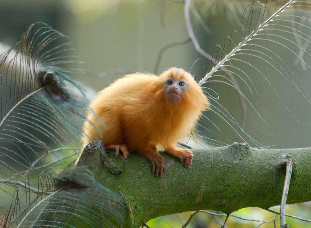 species of monkey